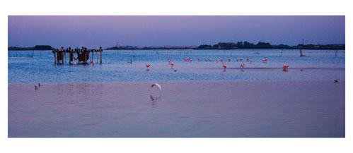 Aigues Mortes, Depuis les berges de l'étang du Médard - Carte Postale panoramique 10x23. Photographe Marianne Raous