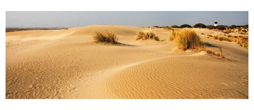 La plage de l'Espiguette -Les dunes et le phare.  Carte postale panoramique 10x23 cm - Photographe: Marianne Raous