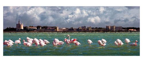 Aigues Mortes - Depuis les berges de l'étang du Médard - Carte Postale panoramique 10x23. Photographe Marianne Raous