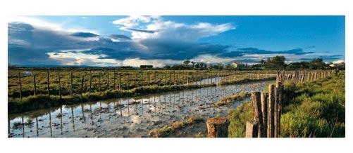 L'étang de l'Or et la petite camargue - cheval de camargue dans les étangs - cabane - Carte postale panoramique 10x23 cm - Photographe: Marianne Raous