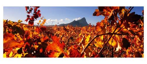 Le Pic Saint Loup dominant les vignes rouges en automne - Vignoble languedoc